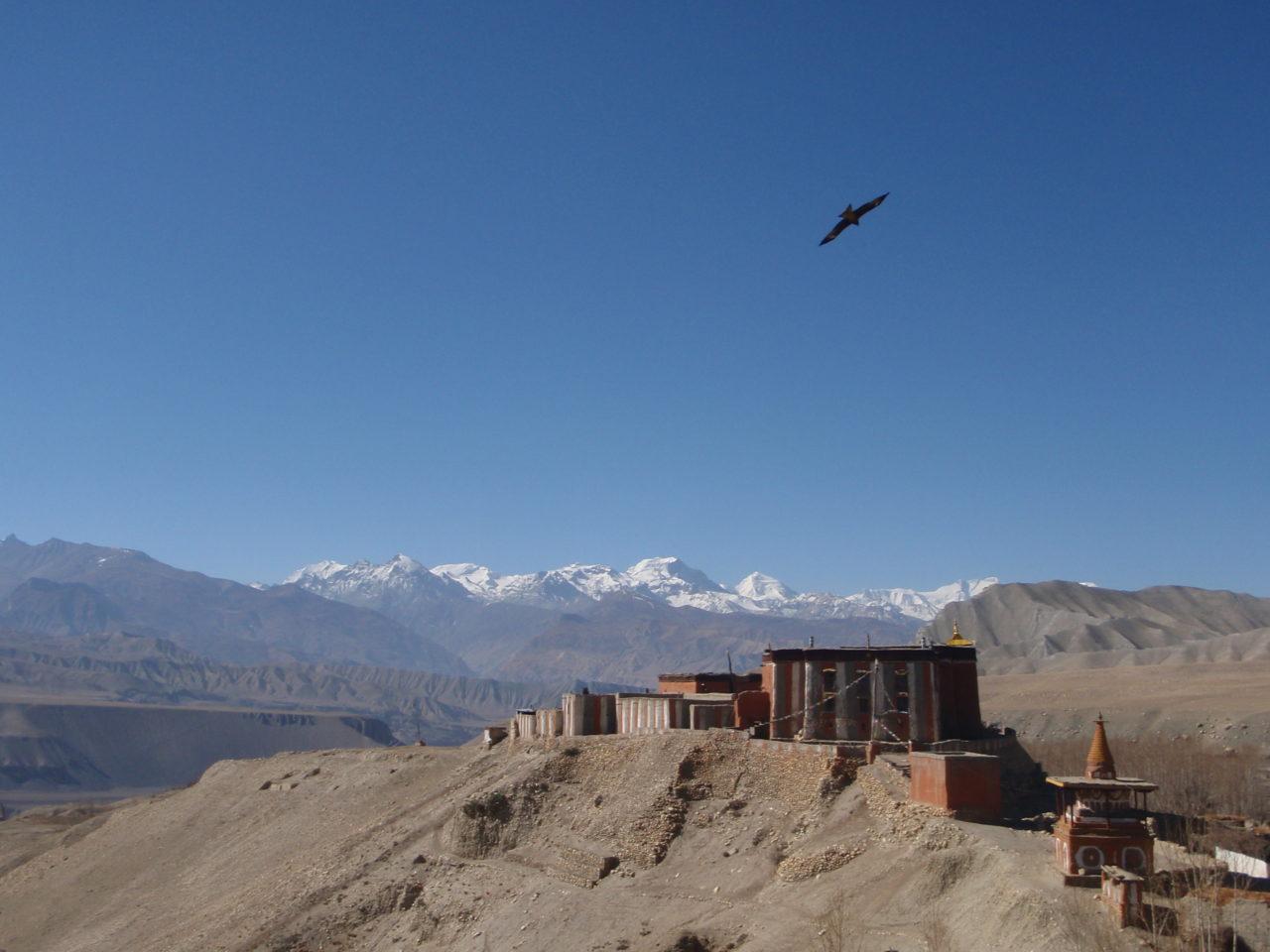mustang_monastery_bird_nepal