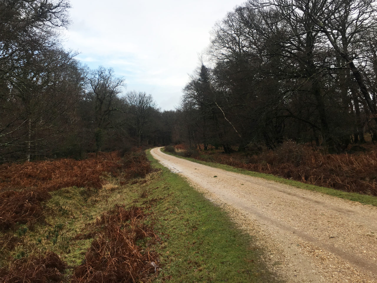 new_forest_gravel_path_woods