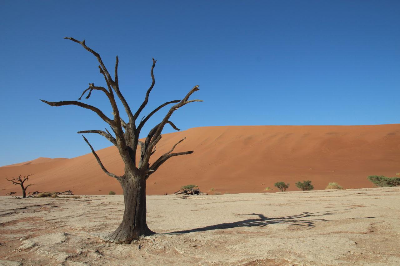 deadvlei_namibia_tree_zafiri