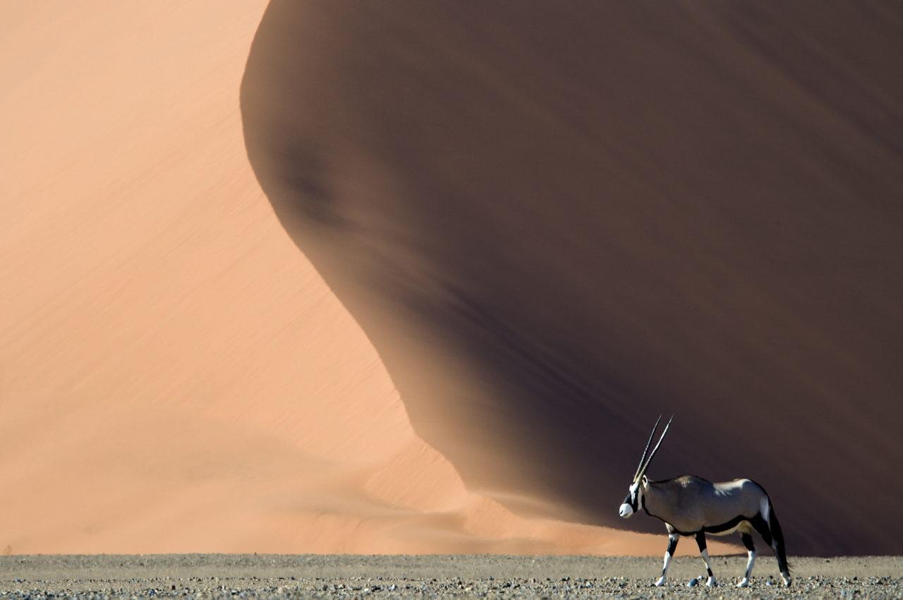 kulala_desert_lodge_wilderness_safaris_oryx
