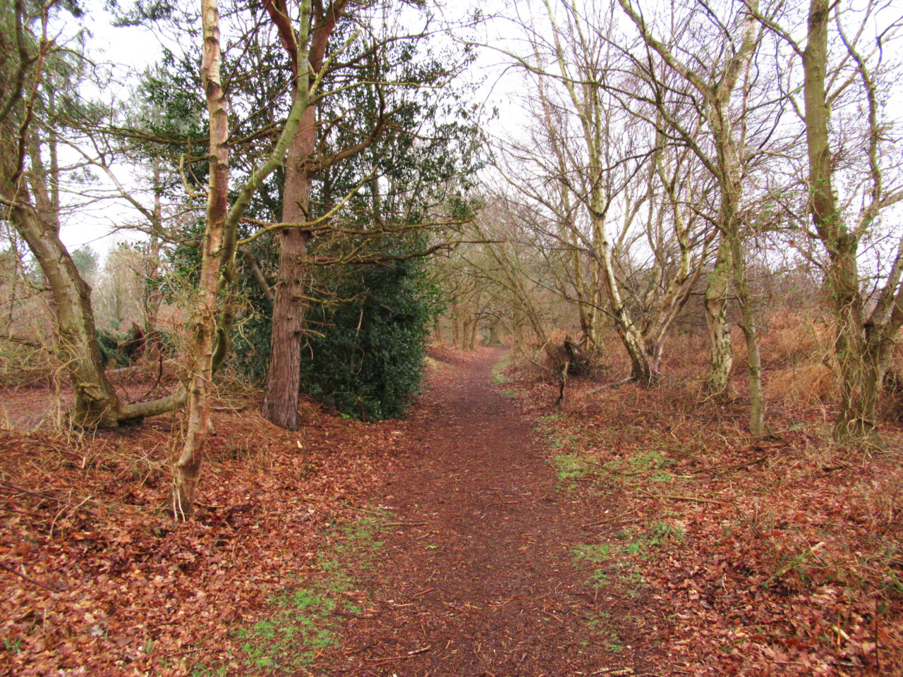 suffolk_coast_trail_pathway