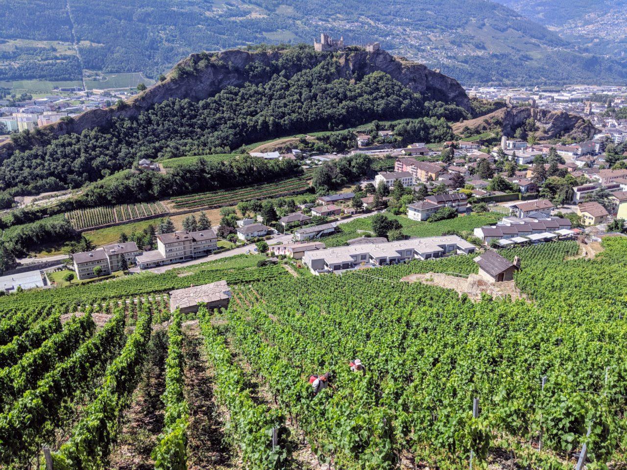 zafiri_vineyards_valais_switzerland